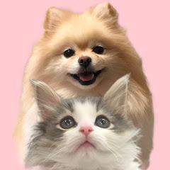 犬と猫ちゃんねる/ソフィーとエレン
