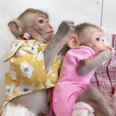Bop - Monkey baby