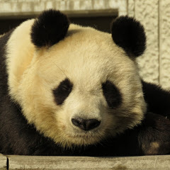 pandaspoon
