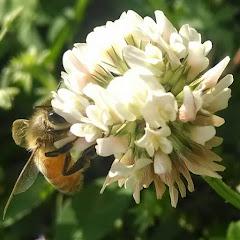 Kamon Reynolds - Tennessee's Bees