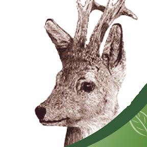 Robin Hood Hunting