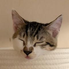 猫のマサとDIY