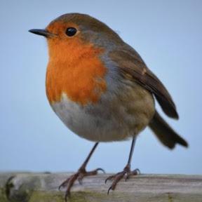 Ornithologie für Anfänger