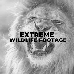 Extreme wildlife footage