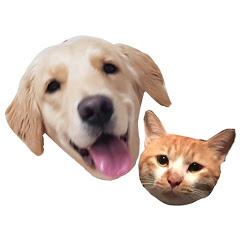 댕댕이와야옹이 cat&dog