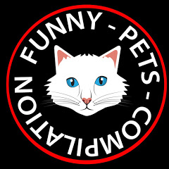 Funny Pets Videos