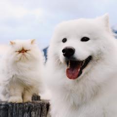 Casper and Romeo