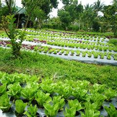 Antioxidant Farm