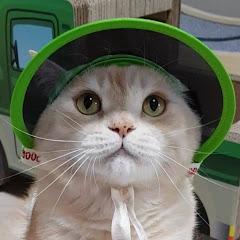통이네 catmomstory