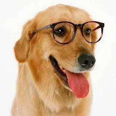 Cães Online
