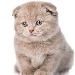 いたずら猫