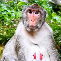Monkey Entertainment