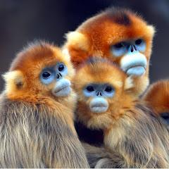 The Newly Monkey Love