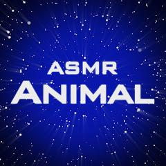 Animal ASMR