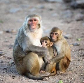 Life Of Monkey