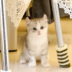 猫のあお君・シネマ