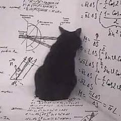 Black Cat - قط أسود