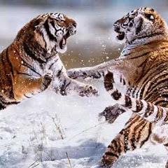 どうぶつのせかい動物の世界