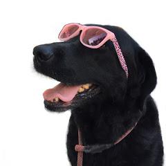 ブランディ・アデル大型犬と楽しもう
