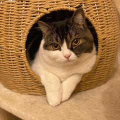 ネコおじの趣味部屋