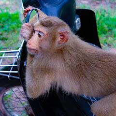 MG Monkey