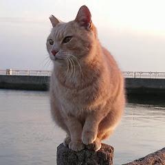 野郎が撮った猫動画
