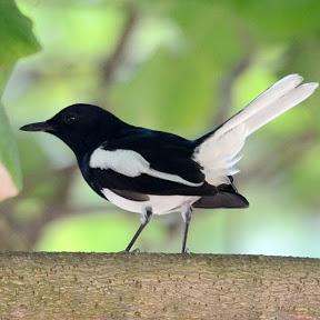 Soumo's Birdbook