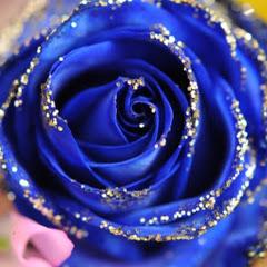 青の薔薇Kakosan