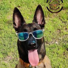 Balu's K-9 Dog training
