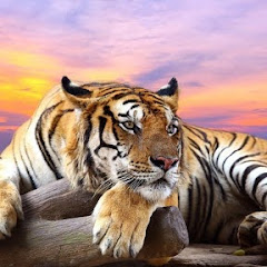 Wild Animals Things
