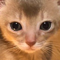 키위크림 KiwiCream Cat