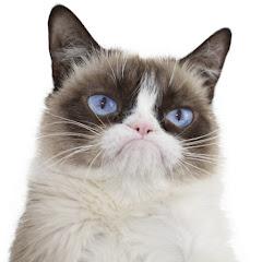Real Grumpy Cat