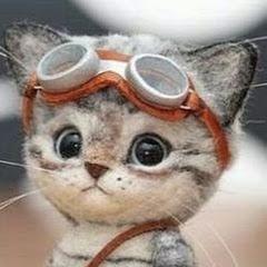 Cutest Kittens City