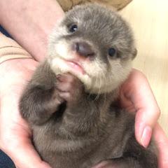 かわうそふぁみりーず OttersFamily with Puppies