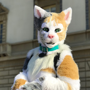 KittenDorm