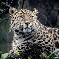 Wildlife TV