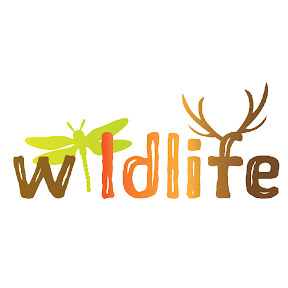 Wildlife Documentary Channel