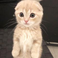 ねおの猫。短足マンチカンよちひこ