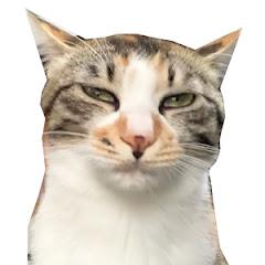 猫ケツドラマーのトオル