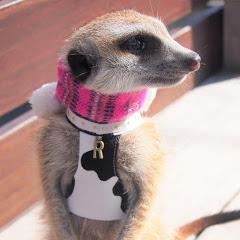 -meerkat- raru channel