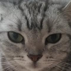 猫と一人暮らし
