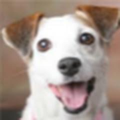 Projeto Adestramento para Cães