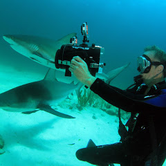 Underwater 3D Channel- Barry Chall Films