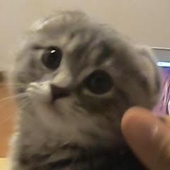 Round Kittens