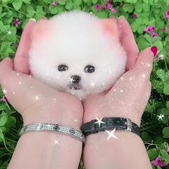 Pets Mini