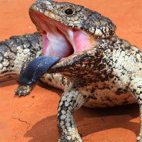 Ataque De Reptil