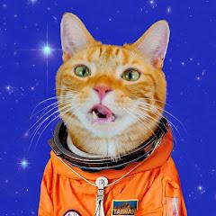 宇宙猫咪 Paw Booom