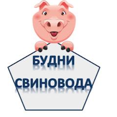 Будни свиновода