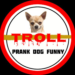 Troll Prank dog Funny