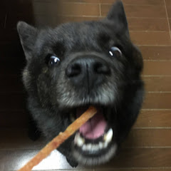 甲斐犬一休と僕のチャンネル